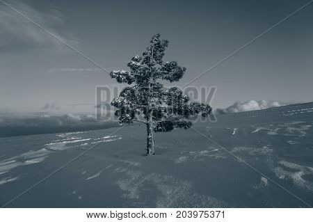 Lonely pine snow and sky in the mountains in the evening. Background for web page design.