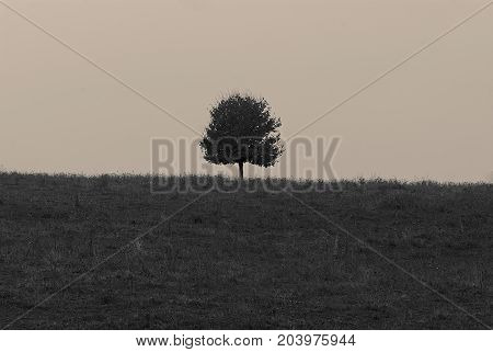 Lonely tree on the horizon in the field. Background for web page design.