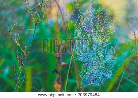 Giant spiderweb with morning dew in a light of sunrise.
