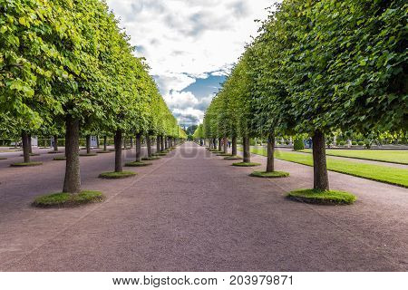ST.PETERSBURG/RUSSIA - JULY 25, 2017. Alley of the upper park of Peterhof State Museum-Reserve - the most famous tourist place in the suburbs of St. Petersburg