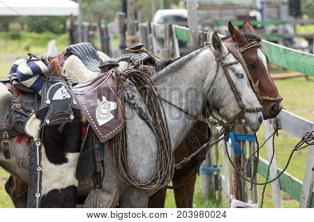 May 27 2017 Sangolqui Ecuador: closeup details of saddled up horses in the Andes area
