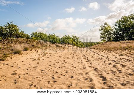 Dunes and sand-drift in a Dutch national park early in the morning on a sunny day in the summer season.