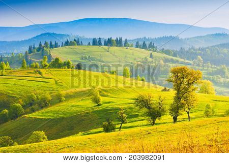 Spring Morning Valley