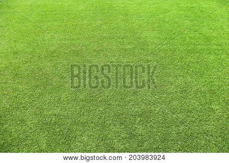 Natural Grass Texture Environmental  Green Fresh Green Manicured Lawn