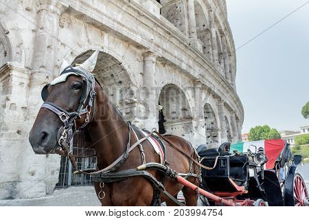 Horse drawn carriage or botticella in Italian on summer Rome street in front of ancient Colosseum