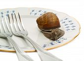 snail crowling on blank plate with two forks closeup poster
