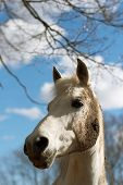 White horse in a dirt on a background of the sky with clouds poster