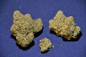 King Louie OG is a high thc indica strain used medically to treat insomnia poster