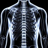 3D Illustration of Spinal cord (Thoracic Vertebrae) a Part of Human Skeleton Anatomy poster