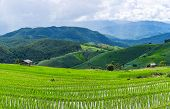 Panorama view with a little hut and Rice terrace in a cloudy lighting surrounded by trees and mountains with a raining storm in the background at Pa Bong Piang near Inthanon National Park and Mae Chaem Chiangmai Thailand. poster