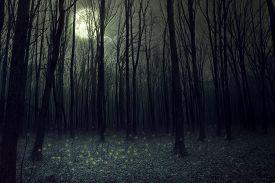 Moon light in darkness autumn forest. Halloween background