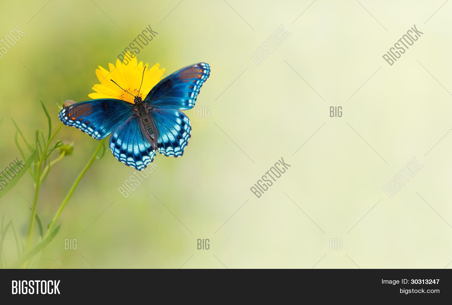 Blue Butterfly On Image & Photo (Free Trial) | Bigstock