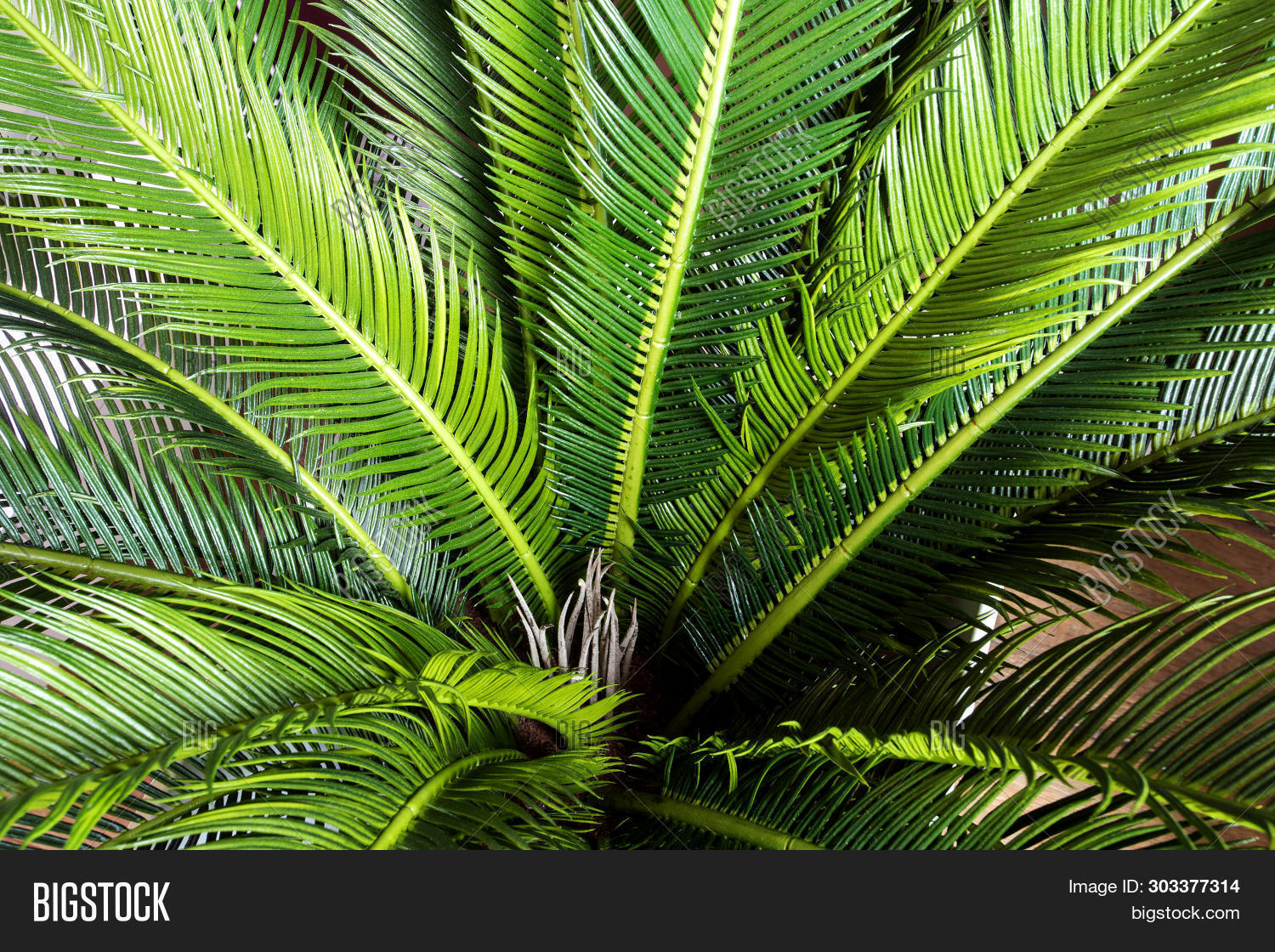 Abstract Green Leaf Image Photo Free Trial Bigstock