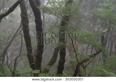 Foggy Day In A Tropical Forest On Madeira Island. Portugal