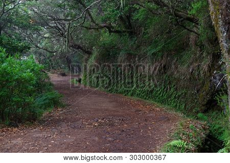 Hiking Trails Along Levadas To Risco Fountain On Portuguese Island Of Madeira