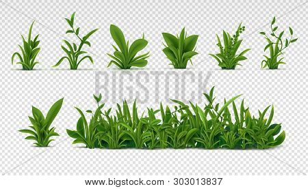 Realistic Green Grass. 3d Fresh Spring Plants, Different Herbs And Bushes For Posters And Advertisem