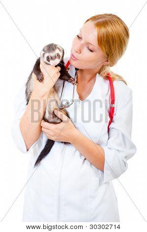 Female vet examines a patient ferret isolated