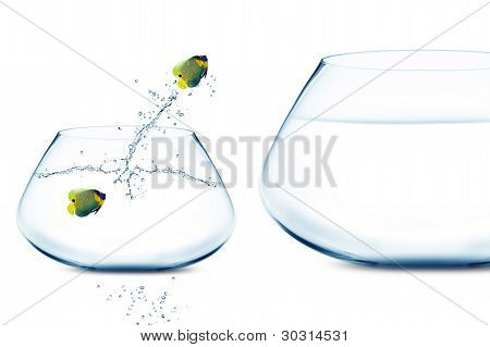 Anglefish In Small Fishbowl Watching Goldfish Jump Into Large Fishbowl