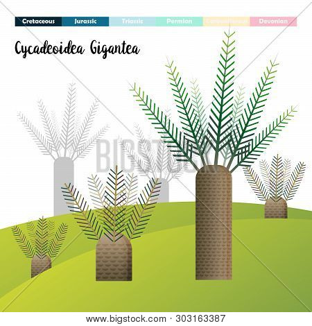 Cycadeoidea Gigantea Cycads Age Plants Prehistoric Vector Illustration