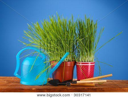 Green grass in two flowerpot on blue background