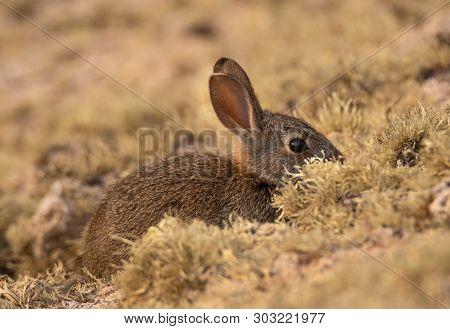 A Wild Little Rabbit Hiding From Predators