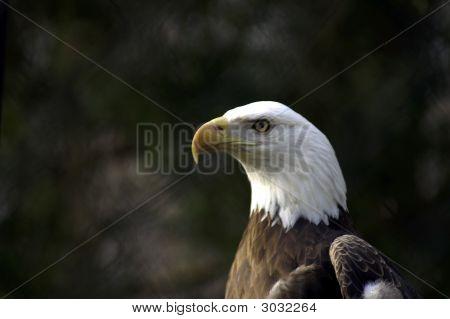 Eagle At Rehabilitation Center