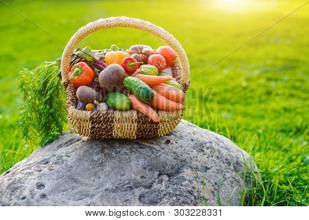 Basket Full Of Fresh Ecological Vegetables On The Grass At Sunset On The Background Of A Rustic Wood