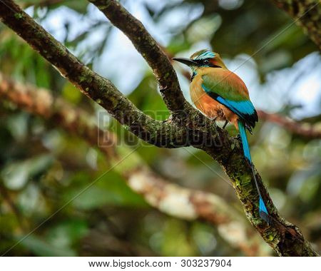 Turquoise-browed motmot (Eumomota superciliosa) in Rincon de la Vieja National Park in Costa Rica