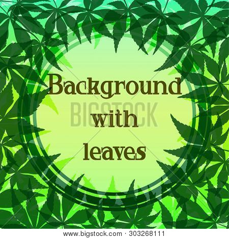 Background With Green Leaves Of Japanese Fan Maple Tree And Round Frame. Vector