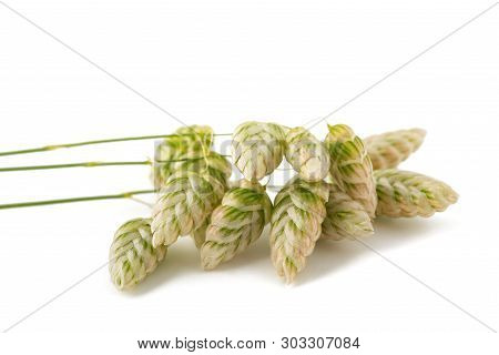 Big Quaking Grass Isolated On White Background