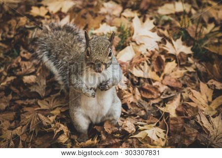 Squirrel On A Stump. Squirrel In Nature. Cute Squirrel On A Tree Branch. Portrait Of A Squirrel - Im