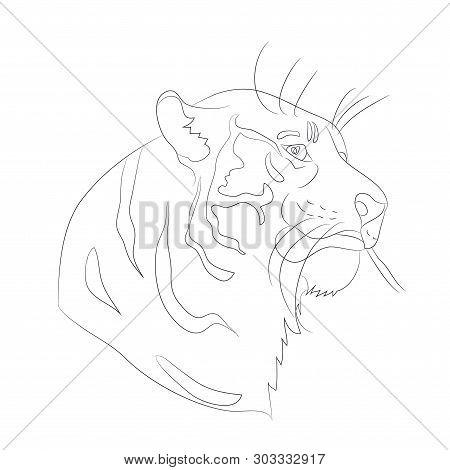 Vector Illustration Portrait Of Tiger Lines, Vector, White Background