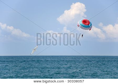 Parachute and seagull