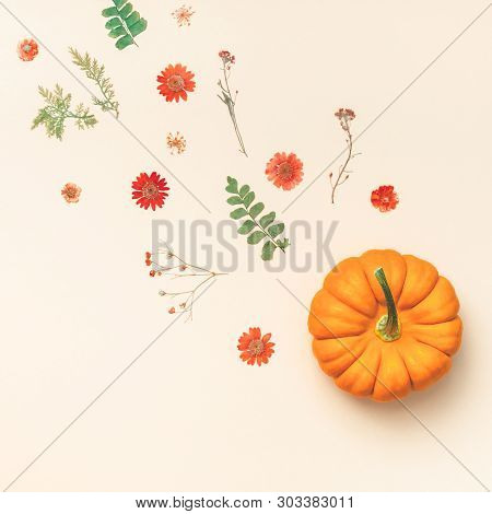 Creative Top View Flat Lay Autumn Composition. Pumpkins Dried Flowers Leaves Color Paper Background