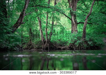 Green Forest Landscape. Forest With Creek. Jungle. Trees With Green Leaves At Clear Creek. Scenic Fo