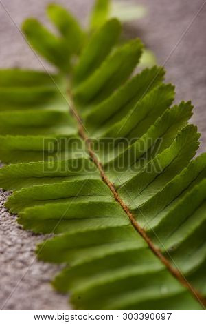 Background With Green Fern Leaves. Close Up