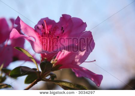 Red Flower On A Tree In A Garden