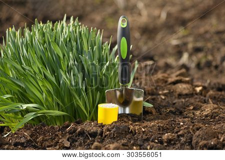 The Sprouted Young Vegetation, Narcissus, Is On The Peat Soil In Rural. The Green Plants And The Gar