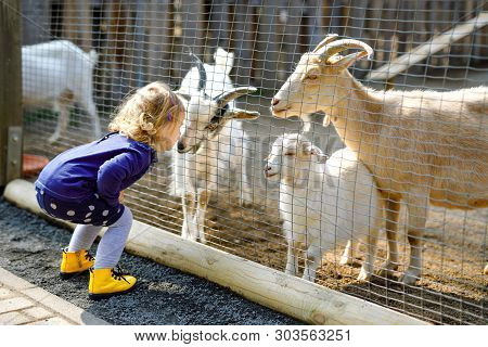 Adorable Cute Toddler Girl Feeding Little Goats And Sheeps On A Kids Farm. Beautiful Baby Child Pett