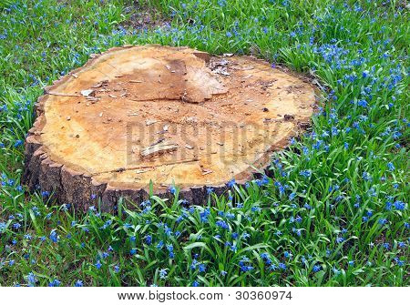 Tree Stump On The Background Of Green Grass