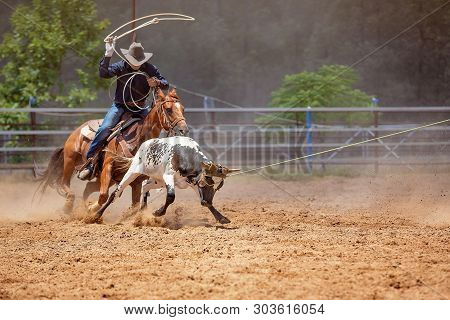 Men On Horseback Lassoing A Running Calf As A Team In The Calf Roping Sporting Event At A Country Ro