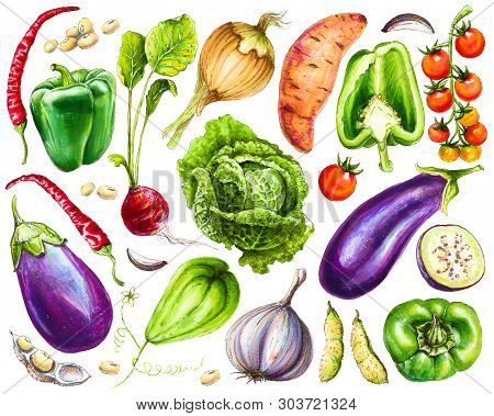 Set Of Fresh Hand-drawn Vegetables. Watercolor Drawing Healthy Food. Image Of Bell Pepper, Chili, An