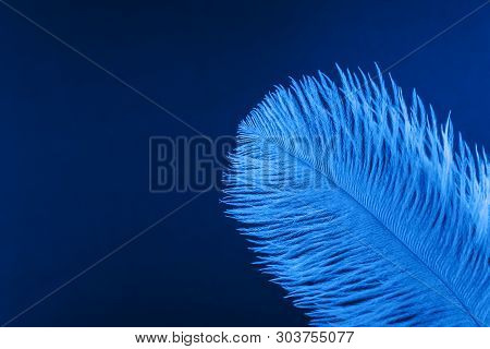 Blue artificial feather close up. Exotic, tropical bird wing feather on blue background. Fashion, ornithology magazine cover concept. Macro accessories, clothes decoration texture poster