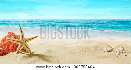 View of the sandy beach. Coral and starfish in the sand. Summer, sunny day.