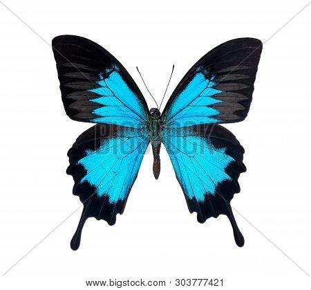 Beautiful Papilio Ulysses Butterfly Isolated On White Background