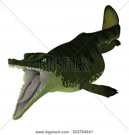 Metriorhynchus Reptile Open Mouth 3d Illustration - Metriorhynchus Was A Carnivorous Aquatic Reptile