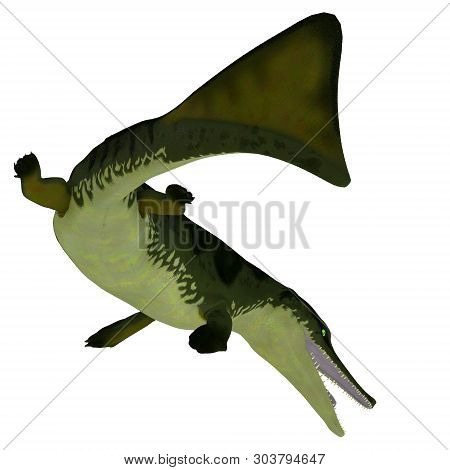Metriorhynchus Reptile Tail 3d Illustration - Metriorhynchus Was A Carnivorous Aquatic Reptile That