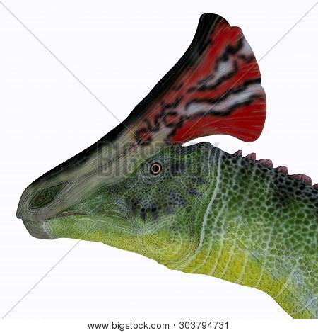 Olorotitan Dinosaur Head 3d Illustration - Olorotitan Was A Duckbill Crested Herbivorous Dinosaur Th