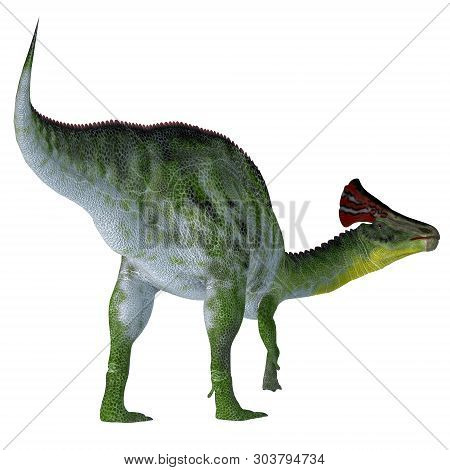 Olorotitan Dinosaur Tail 3d Illustration - Olorotitan Was A Duckbill Crested Herbivorous Dinosaur Th