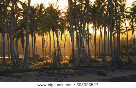 Sunset In Tropical Nature Landscape. Palm Trees Silhouettes Landscape. Ocean Nature In Sunset. Natur